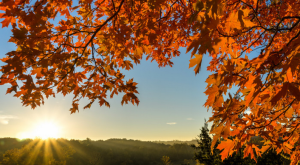The Fall Foliage In These 9 State Parks In Missouri Is Stunningly Beautiful