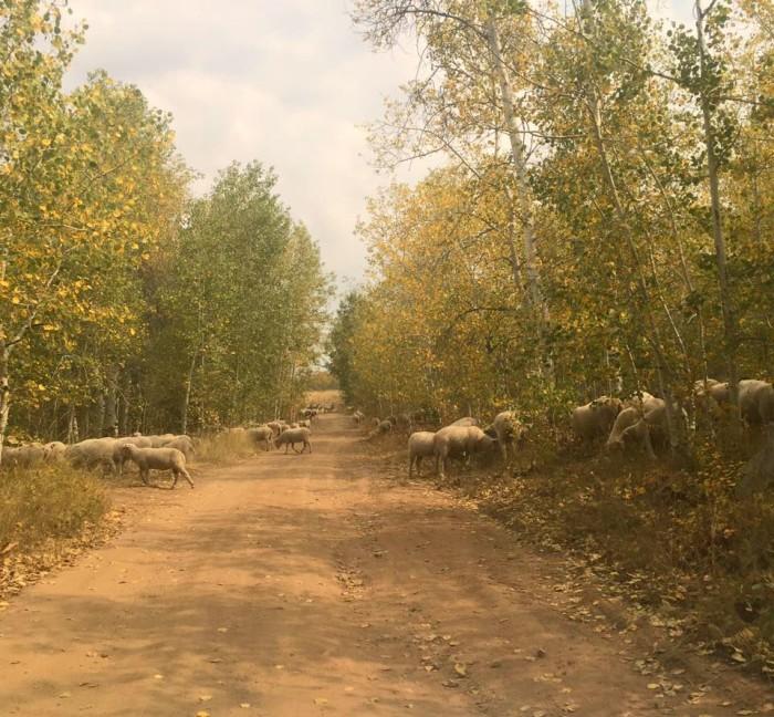 6. Wild Horse State Recreation Area