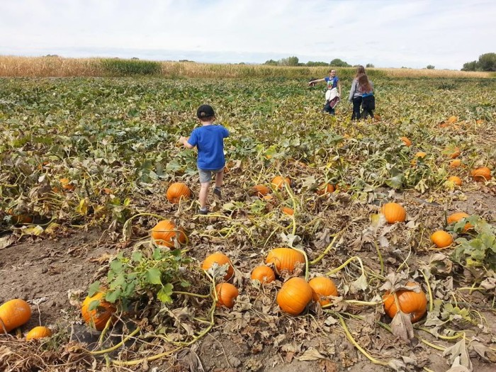 1. Lattin Farms Pumpkin Patch