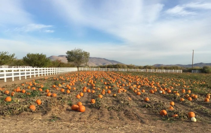 3. Andelin Family Farm Pumpkin Patch