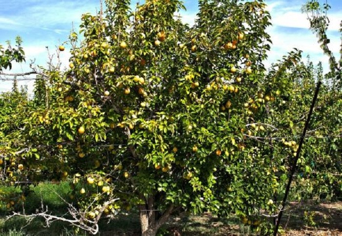 1. Gilcrease Orchard - Las Vegas, NV