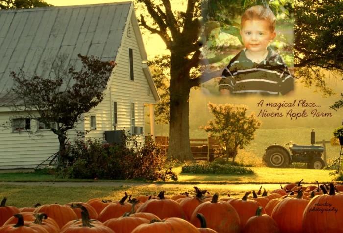 Nivens apple farm 2