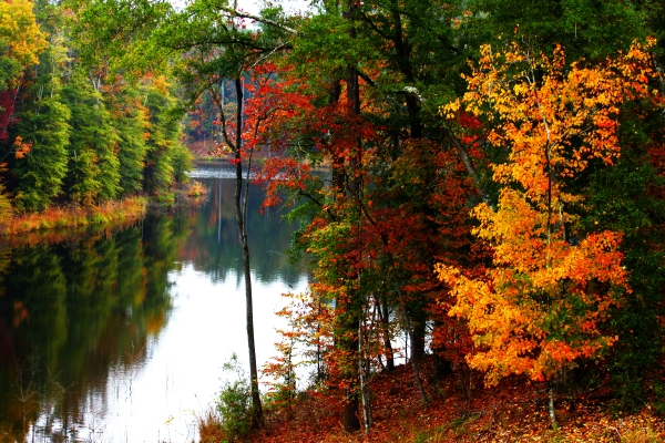 11. Located in the Homochitto National Forest, Lake Okhissa provides gorgeous views year round.