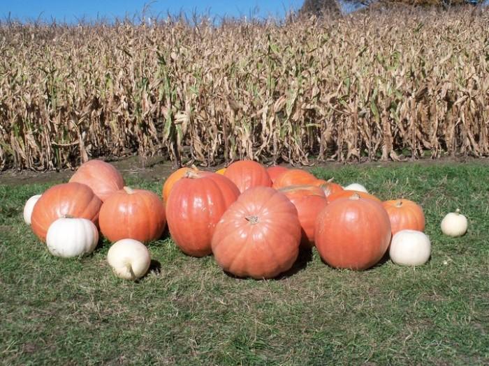 3) Pahl's Pumpkin Patch, Buckley