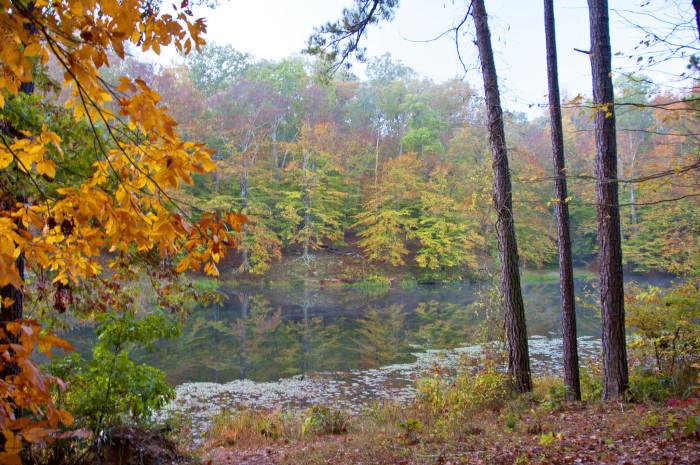 Pocahontas State Park trees