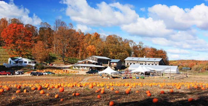 2) Pond Hill Farm, Harbor Springs