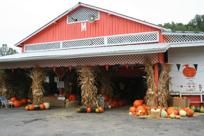 7. The Punkin Patch Farm, Nickelsville