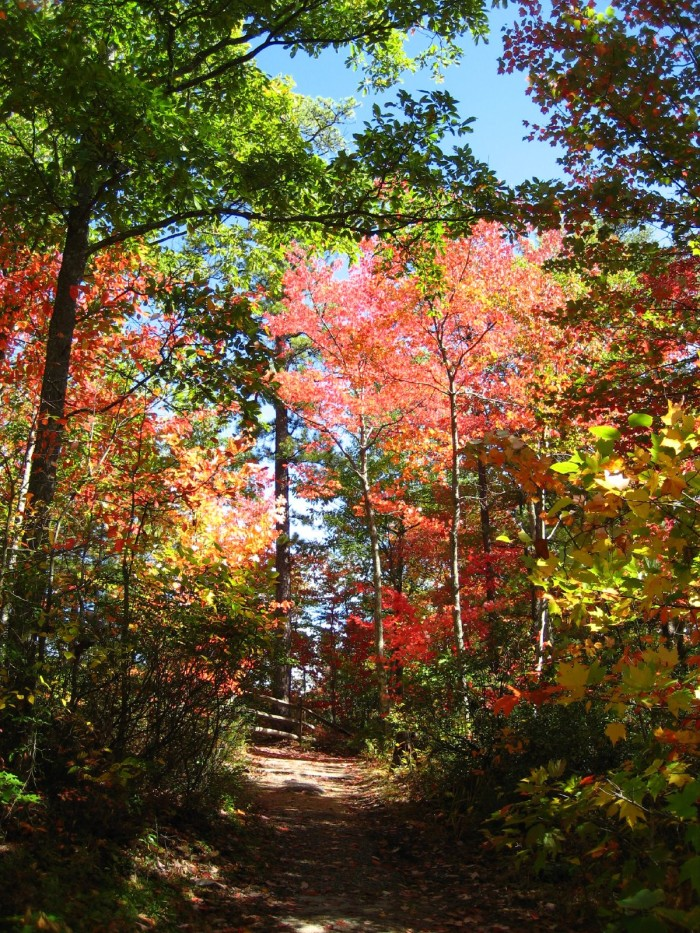 1. Any Red River Gorge Trails