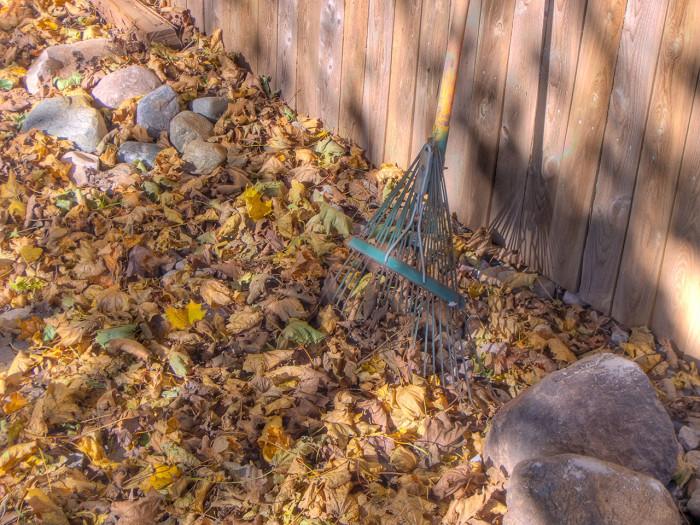 7. Rake Leaves
