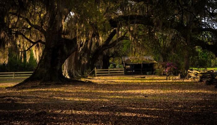 3. Magnolia Plantation as seen through Ray Richards' camera.