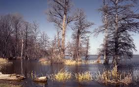 7. Reelfoot Lake and Wildlife Preserve.