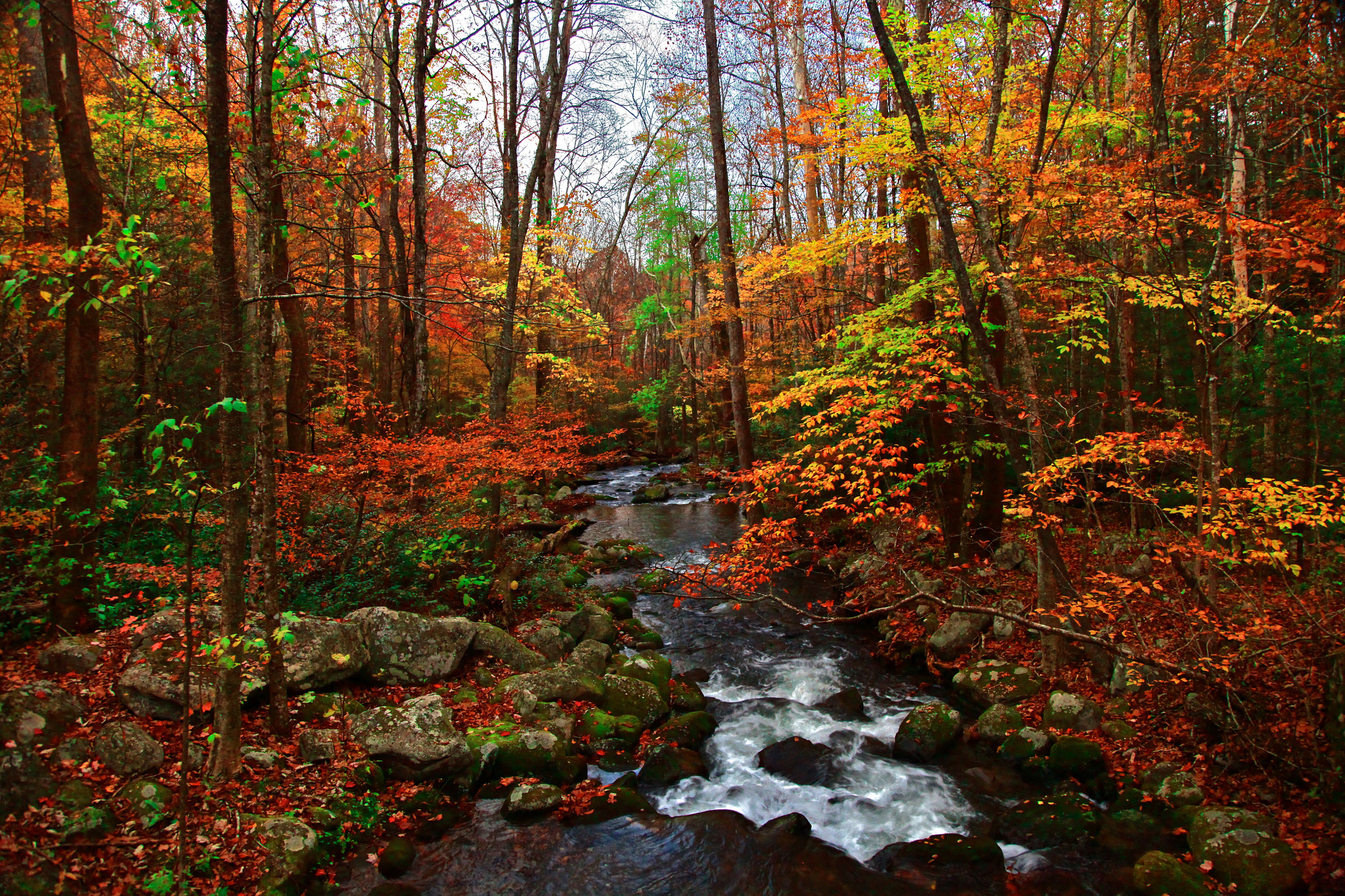 you must visit these 10 awesome places in tennessee this fall