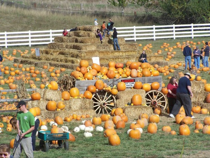 3) Roloff Farms, Hillsboro