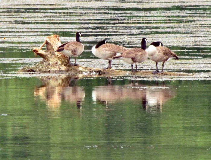 4) Seven Islands State Birding Park