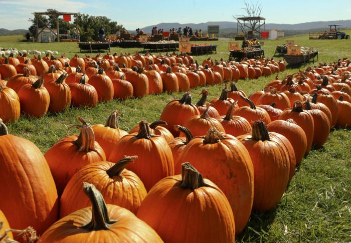 Sinkland Farms pumpkins