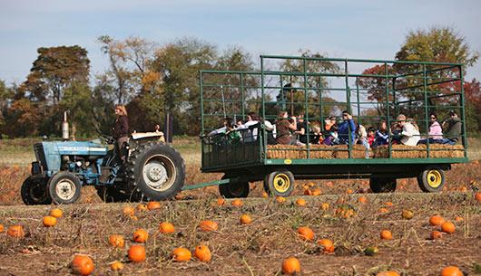 12. Snead's Asparagus Farm, Fredericksburg
