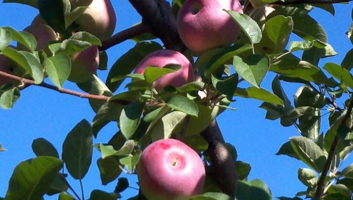 Stribling Orchard 2