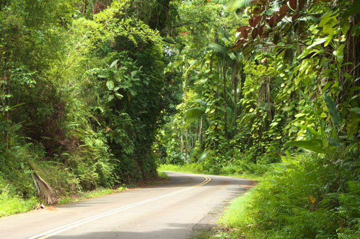 11) Take a break from the ocean views with this scenic byway north of Hilo.