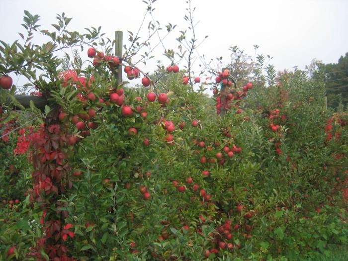 3. Terhune Orchards, Princeton