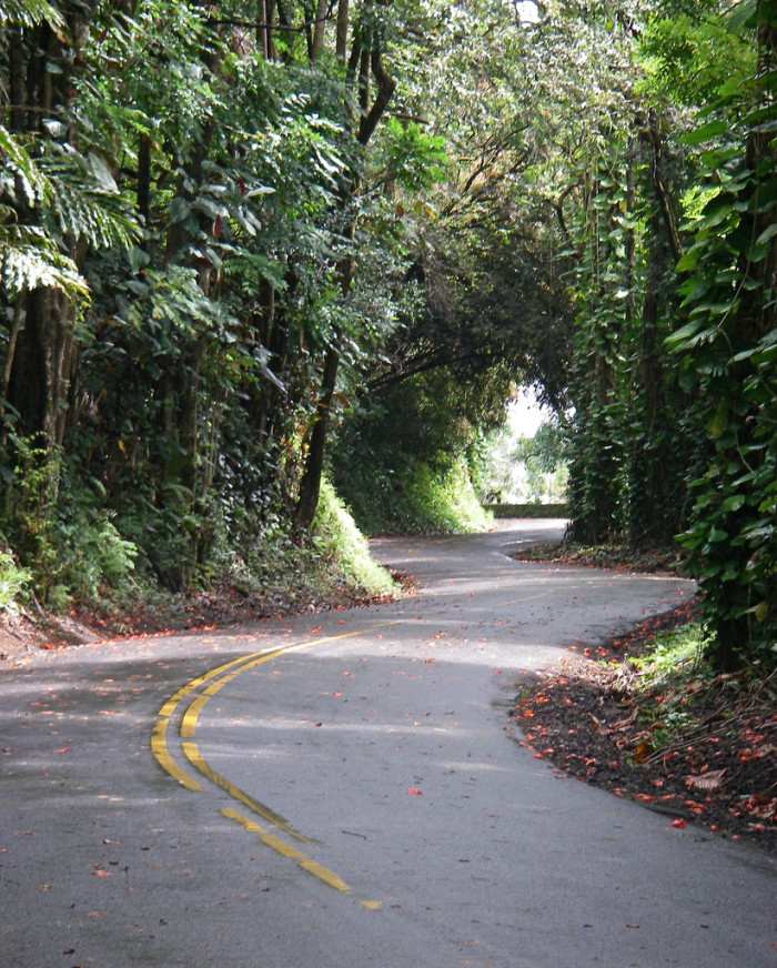 7) This narrow road on the Hamakua Coast of the Big Island is four miles of heaven – but it is also rather dangerous, so be careful, drive slowly, and definitely don't do the drive if it's pouring.