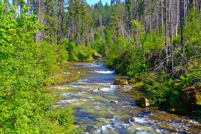 1) Willamette National Forest