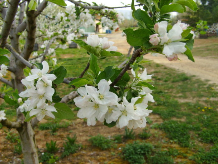 Winy Hill blossoms