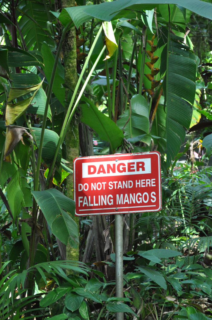 12) You know that someone tried to sue after being hit with a mango in order for this sign to be put up.