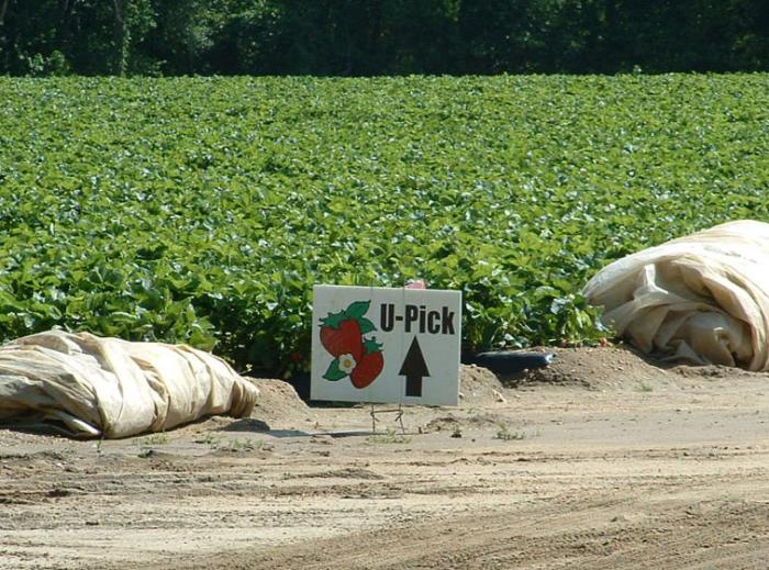 8. Sparacio Farms, Bridgeton