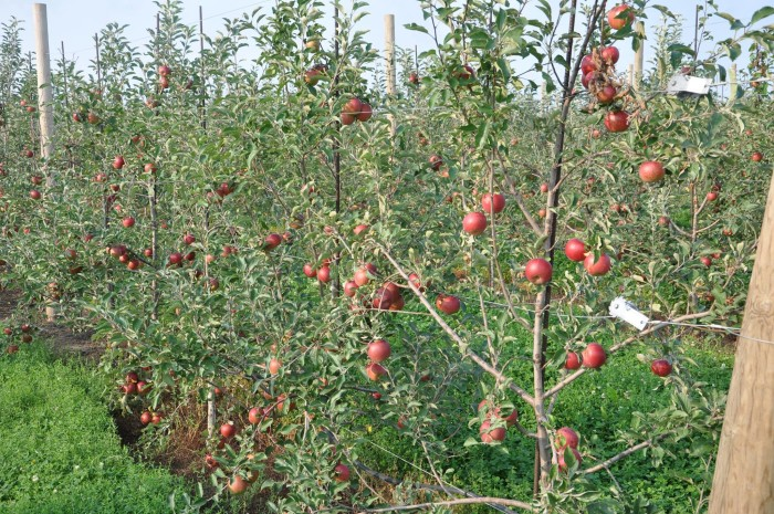 7. Apple Orchards Are Gearing Up for Their Busy Season, Too.