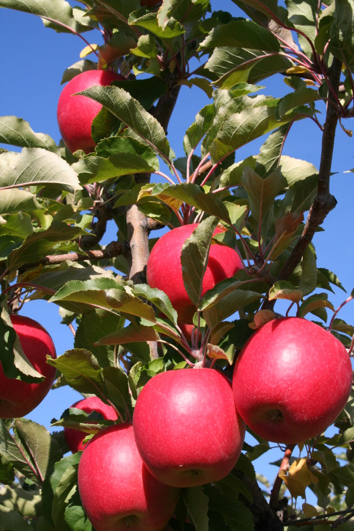 2. Our state fruit is in season and they taste fresher than ever!