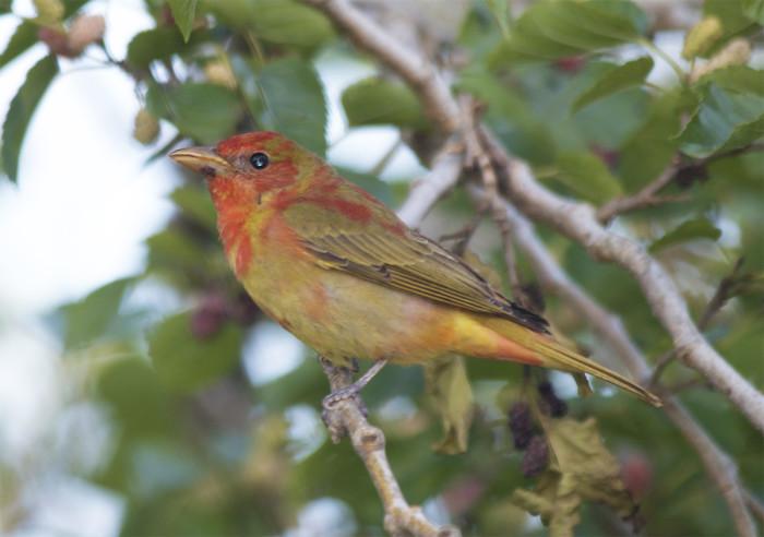 3) Grand Isle Birding Trail, Grand Isle