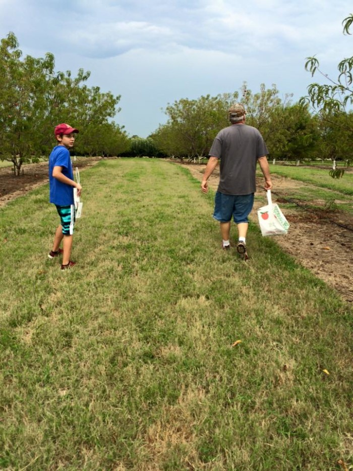 10. Cadron Crest Orchard