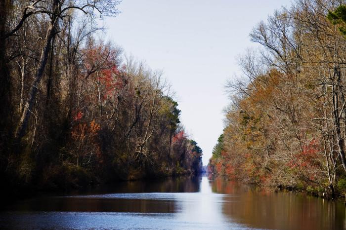 7. Dismal Swamp State Park