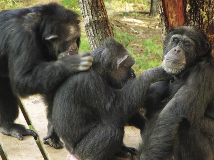 4) Chimp Haven, outside of Shreveport