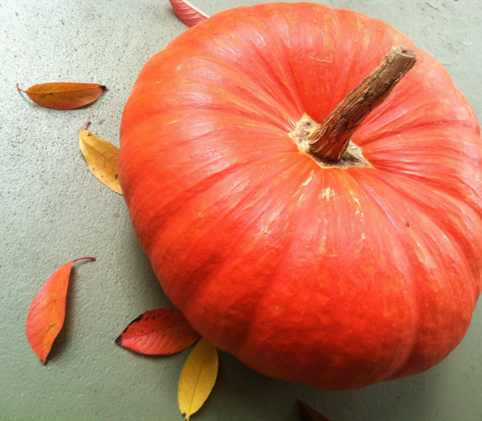 4. Cinderella Pumpkin Farm