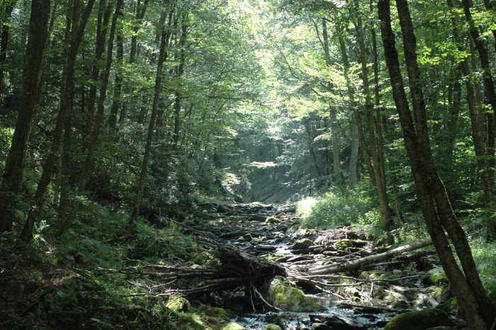 7. This spot deep in the forest in Simoda (Pendleton County).
