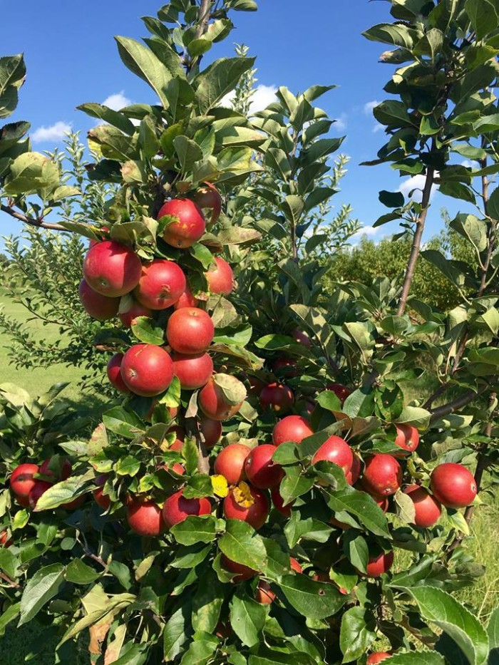2. Drewry Farm and Orchards