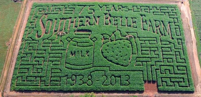 6. Southern Belle Farm - 1767 Turner Church Rd, McDonough, GA 30252