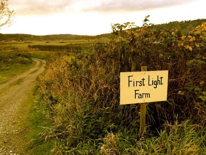 10. First Light Farm, Carnation