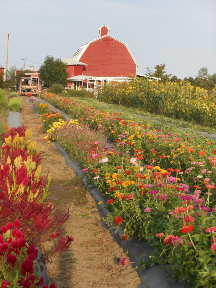 flower-fields-sm