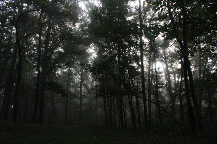 10. Foggy Forest