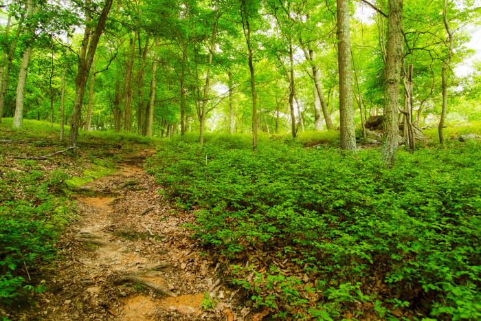 7. Take a hike