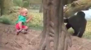 What This Kid And Gorilla Do At The Columbus Zoo Is Adorably Priceless