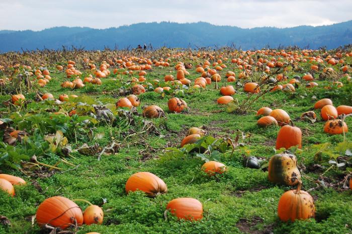 8) The Pumpkin Patch On Sauvie Island