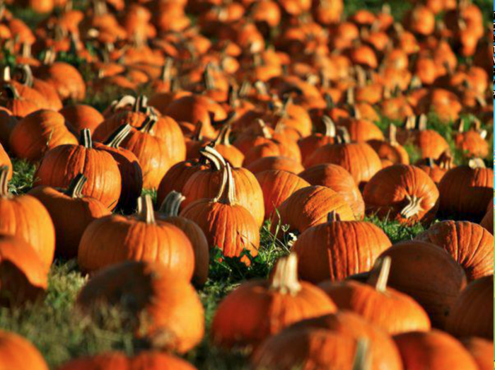 don u2019t miss these 19 great pumpkin patches in nebraska this