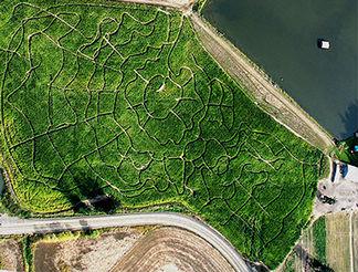 7) Lakeview Farms