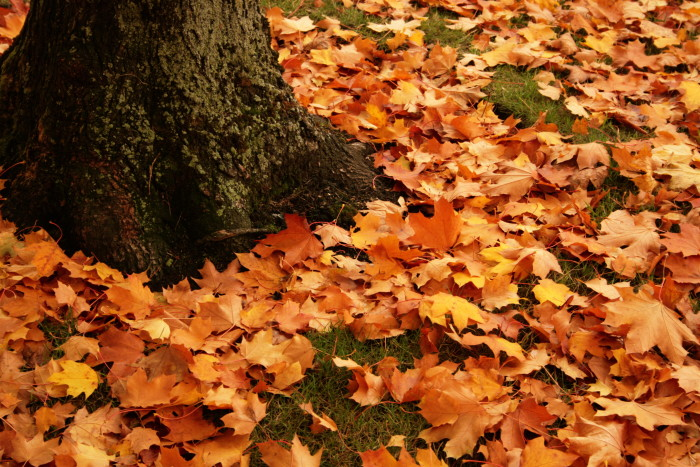 1. Sweep up leaves...