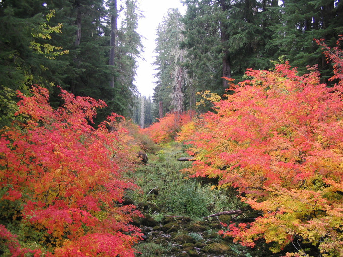 9) Mckenzie River National Recreation Trail (26 miles)