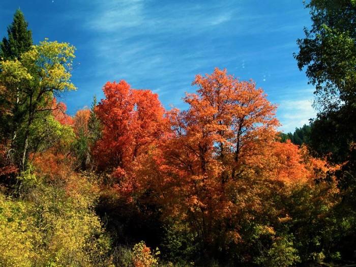 20) Millcreek Canyon
