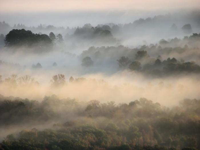 2. Mount Nebo Morning Fog